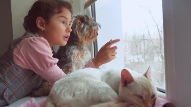 teen dívka a domácí kočka a pes se dívala z okna, pet Kočka spí