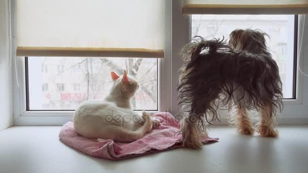 macska és egy vicces kutya Yorkshire Terrier a könyöklő, ablak kisállat ülő