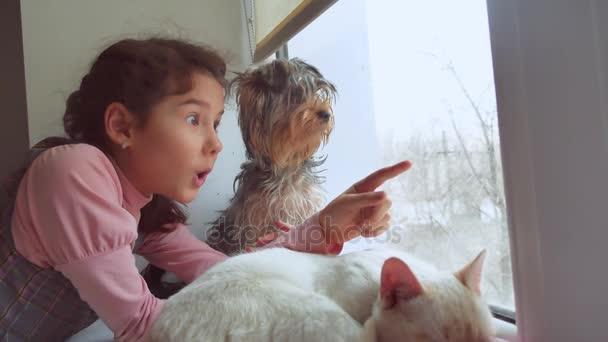 dospívající dívka a domácí kočka a pes vyhlížel pet okno, kočka spí
