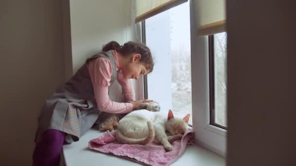 teen dívka a domácí kočky a psa při pohledu z okna, kočka spí