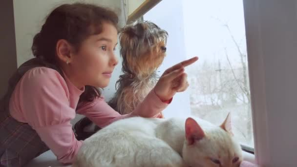 girl teen and pets cat and dog looking out the window, pet the cat sleeps