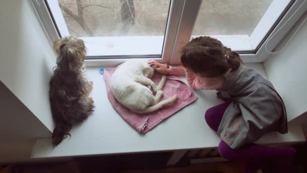 girl teen and pets cat and dog pet a looking out the window, cat sleeps