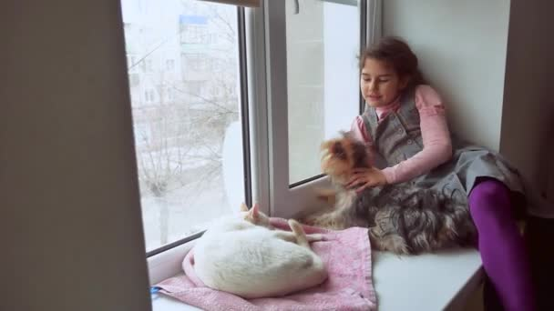 girl teen and pets cat and pet dog a looking out the window, cat sleeps