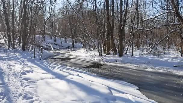 flusso della foresta paesaggio scorre nella neve di inverno foresta natura