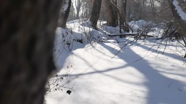 zmrazené potoku v sníh vrcholky stromů krajina příroda