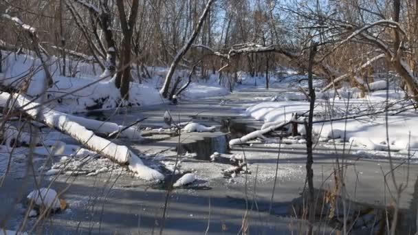 lesní proud teče zimní přírody krajiny sněhu