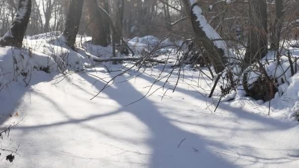 zmrazené potoku v sníh vrcholky stromů příroda krajina