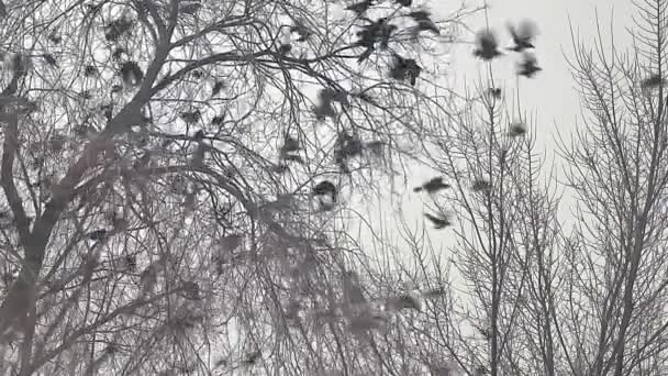 hejno ptáků sundala Vrána ze stromu, hejno vran černý pták suchý strom