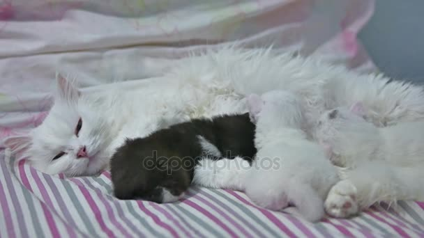 cat white and kitten love nice. pets newborn the kitten