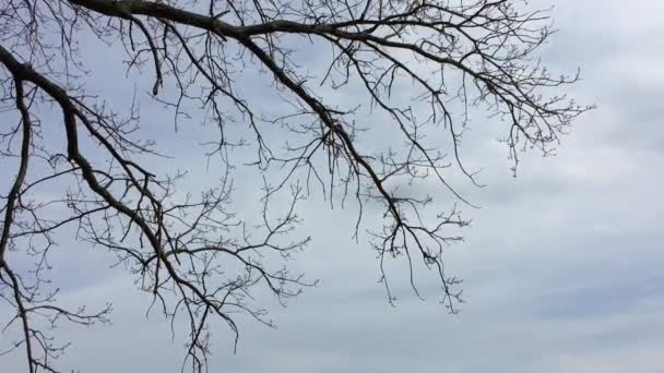 Dry branches of trees without leaves. Nature forest against sky the gray