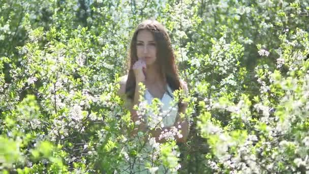 Girl and blooming cherry. The girl lifestyle is standing in nature blossoming garden cherry