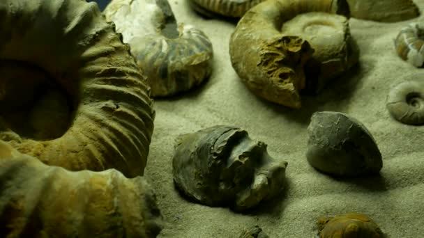 Starobylé prostředí. mnoho prehistorických fosilních ammonite na povrchu kamene, archeologie a paleontologie koncepce