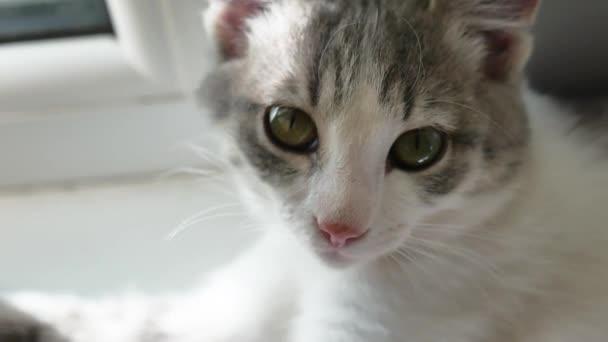 cat pet portrait. beautiful spotted cat sits by the window portrait indoor
