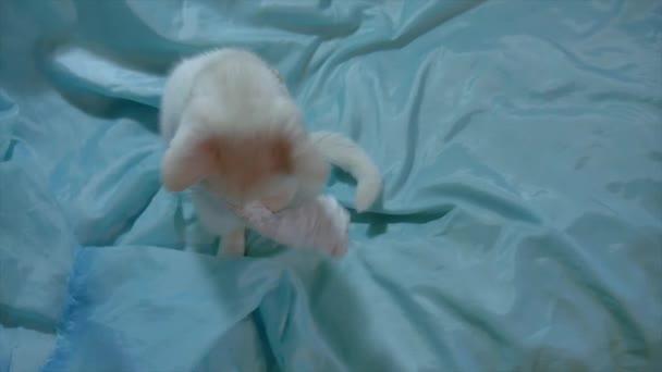 cica játékot játsszák egy darab papír. fehér macska fedett játszott