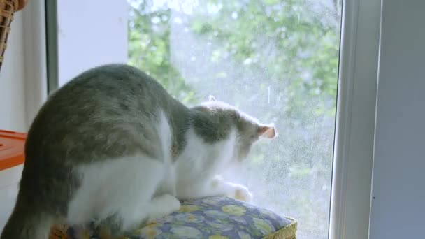 kitten is playing catching a fly on the window. kitten pet plays funny pet