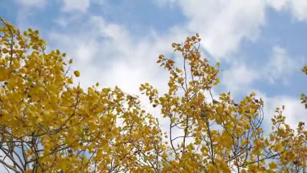 žlutá trička podzimní stromy proti modré obloze. krásná podzimní lesní příroda krajina