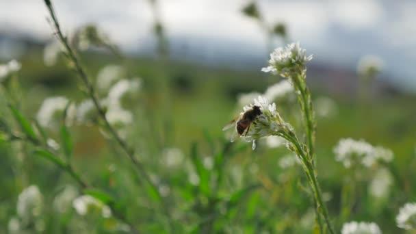 Včely létají do finále zelené rostliny