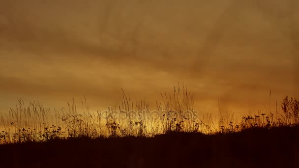 fű háttér sziluettek sun set természet