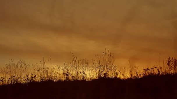 Travní pozadí siluety s sun set životní styl povahy