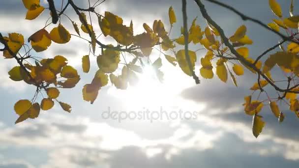 Osika slunečního světla listy na pozadí modré oblohy. listy a krásné slunce oslnění lesní slunce krajina podzim