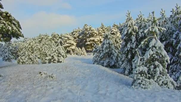 Hóesés a parkerdőben. Téli táj havas parkban. Erős havazás.