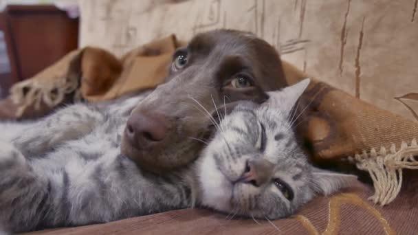 kočka a pes jsou spolu spíme vtipné video. kočičí a psí přátelství uvnitř