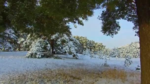 wunderschöne Winterlandschaft mit schneebedecktem Baum. Starker Schneefall im Winter. Weihnachtsbaum die Schönheit der Natur Landschaft im Freien