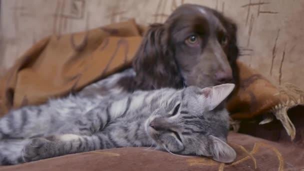 kočka a pes jsou spolu spíme doma funny přátelství video. kočka a pes