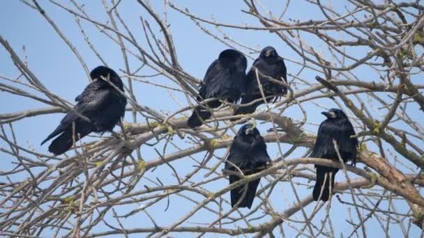 Ptáci na větvích stromu. Siluety na bílém pozadí