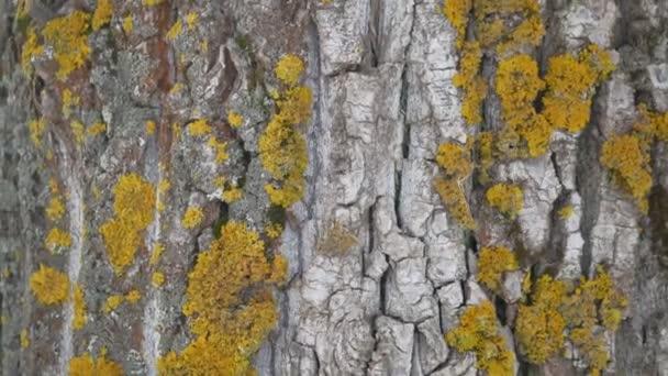 texturou kůry stromu s žlutým mechem kmen stromu povahy krajiny venku