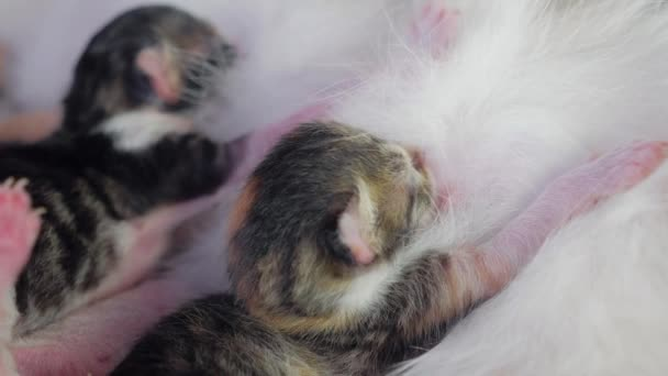 blind kittens with closed eyes. cute cats are lying lifestyle asleep . cute tri-color kitten newborn pet on a white indoors background pet concept indoors kitten