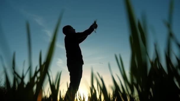 vědec siluetu člověka zemědělce v poli s trávou zkoumá zemědělství v západu slunce. Pojem ekologie. Chytré hospodaření pomocí moderních technologií v zemědělství. produkt bio životní styl