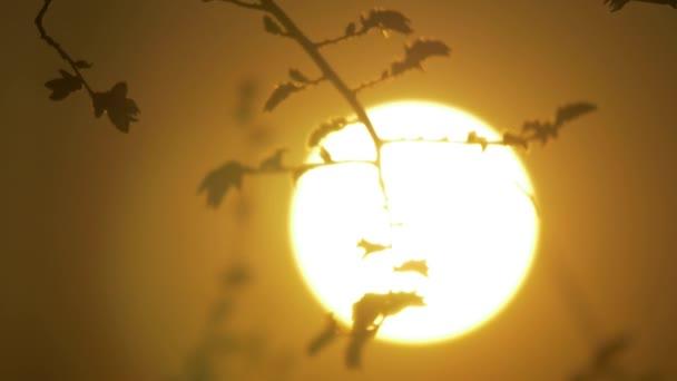 Trockenen Ast auf einem weißen Hintergrund Natur. Ast bei Sonnenuntergang Natur Landschaft Lebensstil Nahaufnahme Sonne