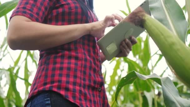 intelligens öko-mezőgazdasági gazdálkodási koncepció. Farmer lány növény kutató egy használ, és érintse tabletta, miközben ellenőrzi a kukorica a gazdaságban. nő digitális tabletta működik a területen életmód