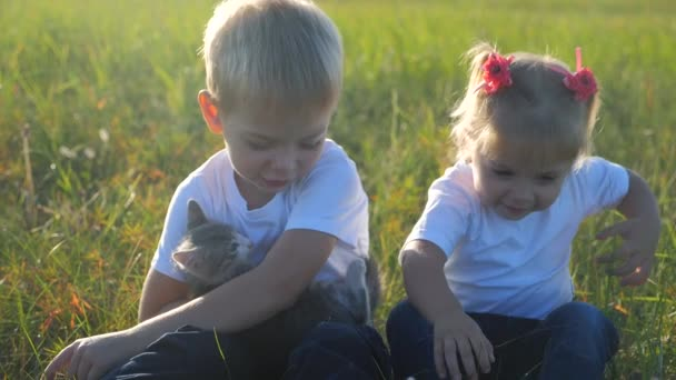 little children and cat concept happy family slow motion video. children brother and sister hold play with a small kitten on the nature sunset summer in the park. little girl and boy are playing with
