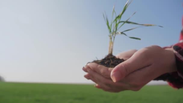 dívčí ruce drží hlínu zelenou mladou rostlinu. ekozemědělství Symbol koncepce jara a ekologie. žena rolnické ruce drží zelenou mladou rostlinu a zemitou hrst v ranním slunečním svitu paprsky země den
