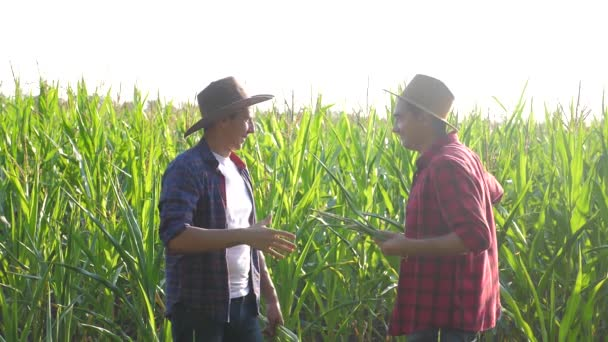 teamwork smart farming husbandry concept slow motion video. two men agronomist two farmers victory shake hands teamwork business success agriculture in the corn field is studying and examining crops