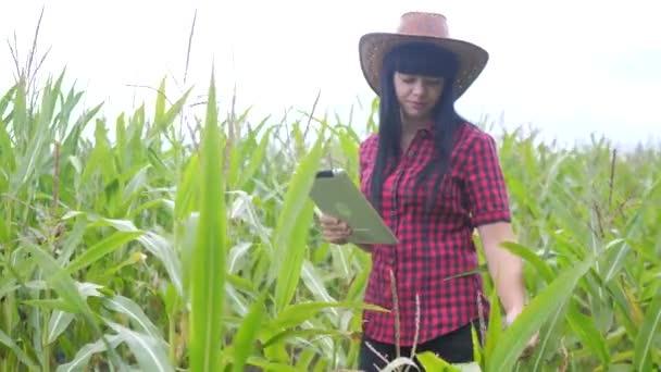 životní styl inteligentní ekologické zemědělství koncept. zemědělec dívka rostlina výzkumník používá a dotknout tablet při kontrole kukuřice na farmě. žena s digitálním tabletem pracuje v terénu