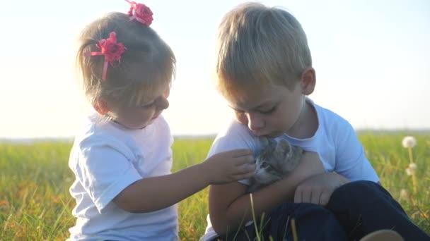 Kleine Kinder und Katze Konzept glückliche Familie Zeitlupe Video. Die Geschwister spielen mit einem kleinen Kätzchen auf dem Sonnenuntergang im Park. Mädchen und Junge sind