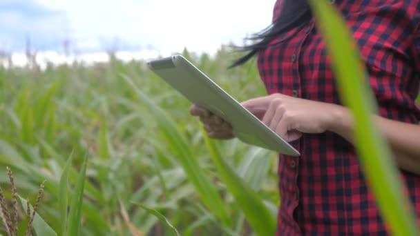 inteligentní ekologické zemědělství životní styl zemědělství koncept. zemědělec dívka rostlina výzkumník používá a dotknout tablet při kontrole kukuřice na farmě. žena s digitálním tabletem pracuje v terénu