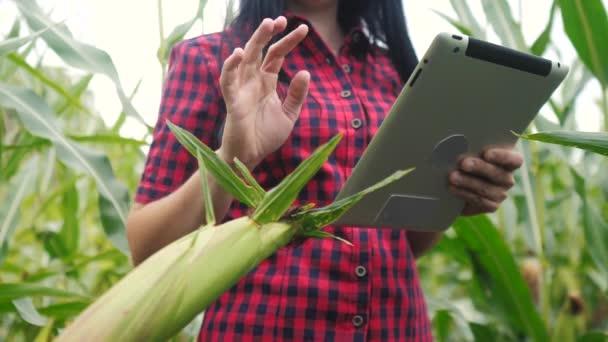 inteligentní koncepce ekologického zemědělství. farmářská dívka vědec používá a dotknout tablet při kontrole kukuřice na životní styl farmy. žena s digitálním tabletem pracuje v terénu