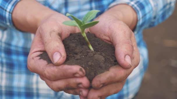 Farmářská ruka drží čerstvou mladou rostlinu slunečnici. muž ruce drží hlínu zelenou mladou rostlinu. ekozemědělství Symbol jaro a ekologie nový životní styl a koncepce ochrany životního prostředí
