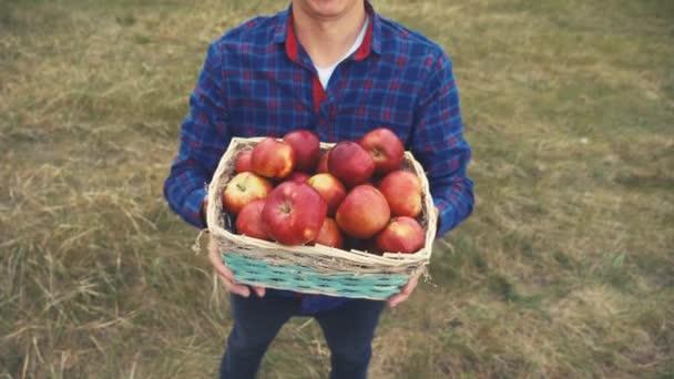 farmář rudý krk sbírá jablka v koši sklizně. zemědělská obchodní koncepce. chytrá zemědělská sklizeň. farmář drží životní styl koš s jablky ukazuje sklizeň
