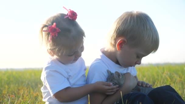 Kleine Kinder und Katze Konzept glückliche Familie Zeitlupe Video. Die Geschwister spielen mit einem kleinen Kätzchen auf dem Sonnenuntergang im Sommer im Park. Mädchen und Junge sind