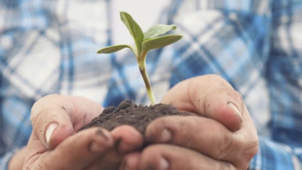 Farmářská ruka drží čerstvou mladou rostlinu slunečnici. muž životní styl ruce drží hlínu zelenou mladou rostlinu. ekozemědělství Symbol jarní a ekologické koncepce nového života a ochrany životního prostředí