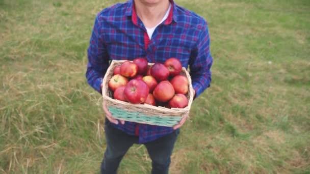 farmář rudý krk sbírá jablka v koši sklizně. zemědělská obchodní koncepce. inteligentní sklizeň životního stylu farmaření. farmář drží košík s jablky ukazuje sklizeň