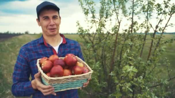 farmář rudý muž krk sbírá jablka v košíku sklizeň na zahradě. zemědělská obchodní koncepce. chytrá zemědělská sklizeň. zemědělec drží koš s jablky životního stylu ukazuje sklizeň