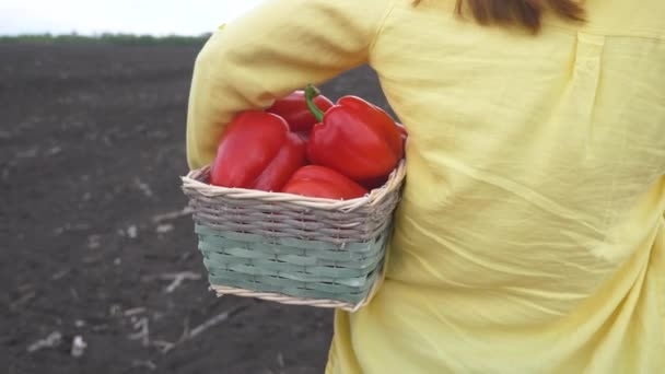 Farmer vörös lány nyak szedi bors egy kosárban betakarítás egy kertben a földön. mezőgazdasági üzleti koncepció. intelligens gazdálkodás életmód-betakarítás. nő farmer kitart egy kosár bors mutatja a