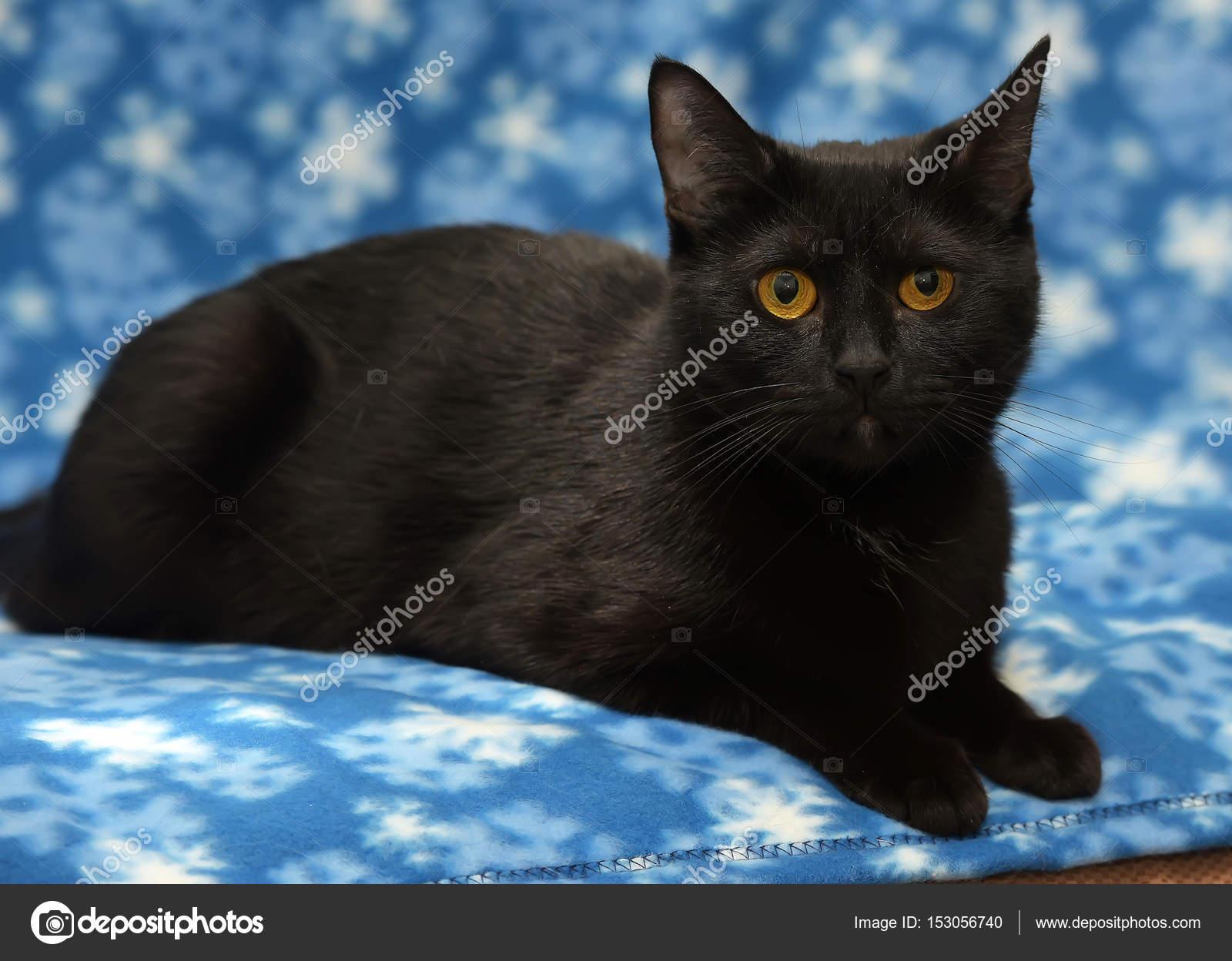 tlustá černá kočička ny ny