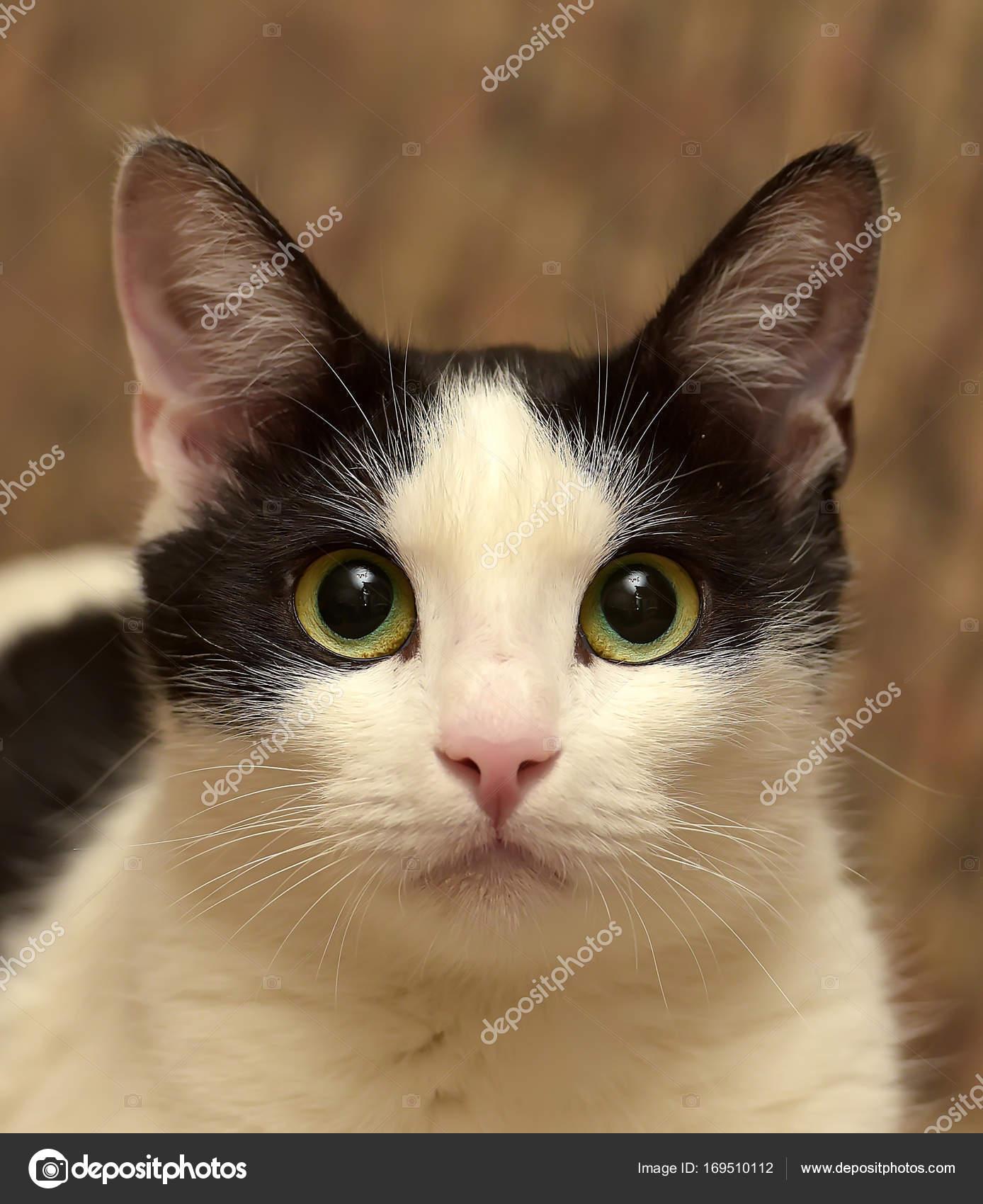 kočička bušení stříkat